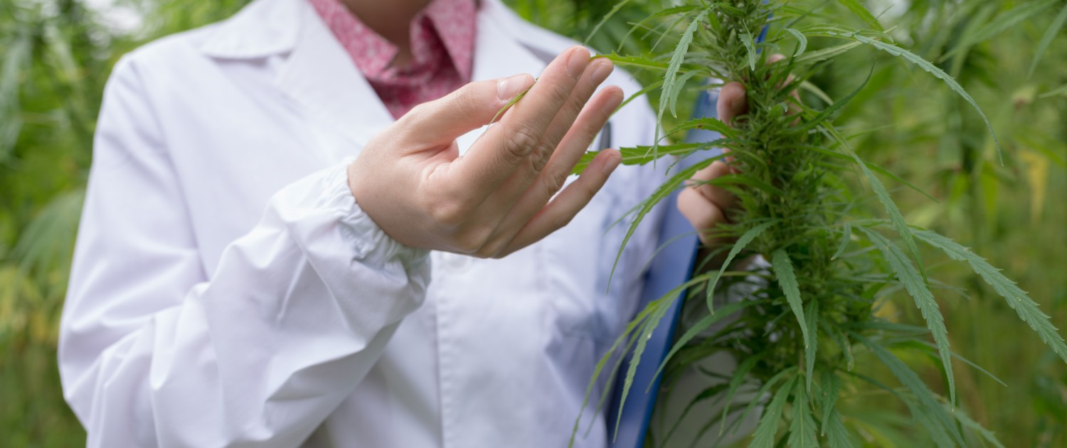 Fidelity Warranty Services >> Will Labs Embrace Medical Cannabis as Legalization Takes Hold?