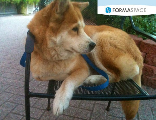 More and more our pets are becoming part of the family. Here Haji the Jindo dog rests comfortably in a chair at a cafe. Formaspace customer Antech Diagnostics is a world-leading provider of veterinary laboratory testing services.